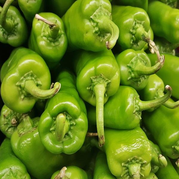 Piri-Piri - Capsicum Anaheim Chili Pepper - Sementes - 2.95€ - Jardimdaceleste.com - Plantas Tropicais & Exóticas!