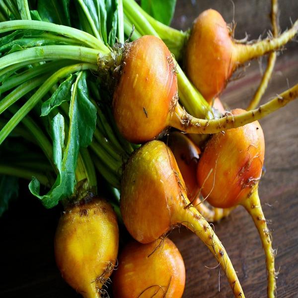 """Beta vulgaris """"Golden Detroit"""" - Sementes - 1.78€ - Jardimdaceleste.com - Plantas Tropicais & Exóticas!"""